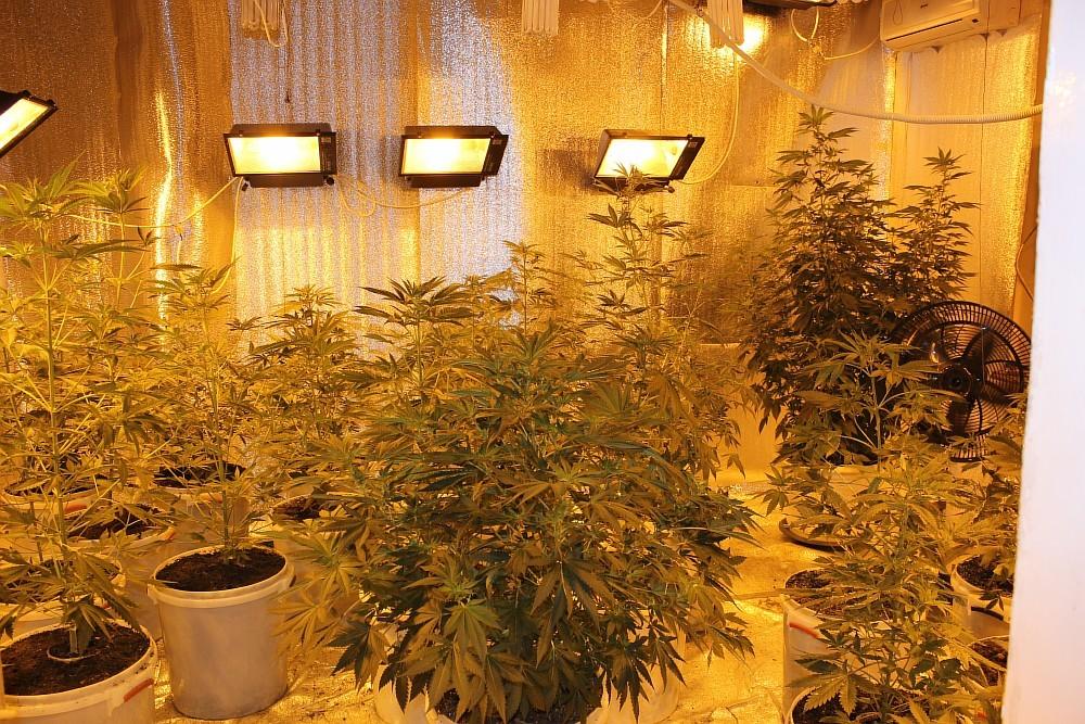 Как вырастить марихуану в домашних условиях смолистая шишка марихуаны